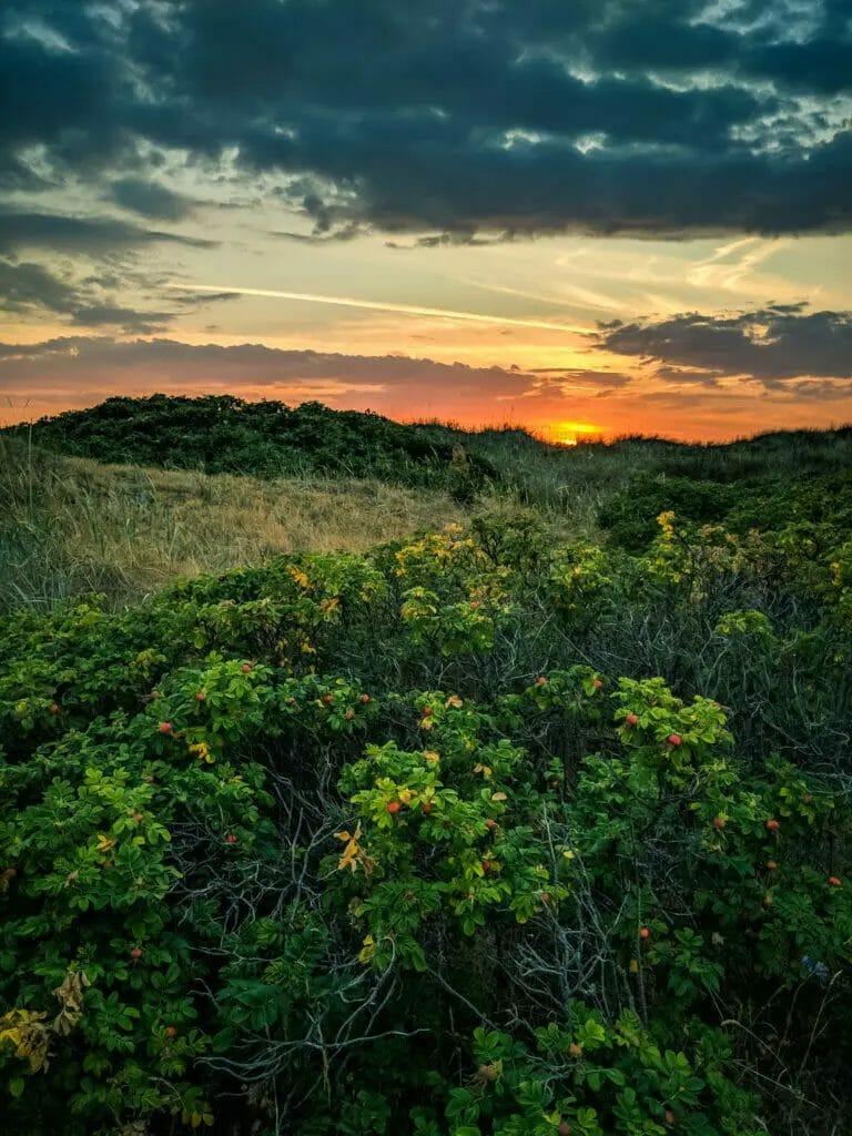 BREATHTAKING NATURE SPOTS IN SKANE, SWEDEN 51