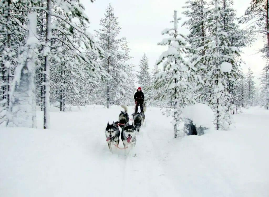 Schlittenhund - Schneemobil
