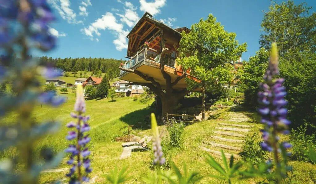Ausflugsziele Baden Württemberg -  Region Baiersbronn im Schwarzwald - Reise - Natur