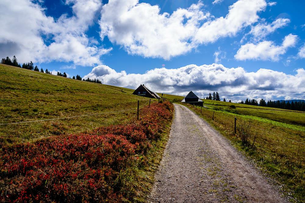 Mount Scenery - Wiese