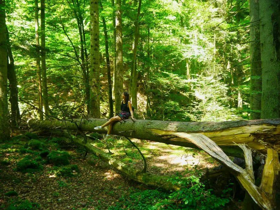 Monbachschlucht Bad Liebenzell - Gemäßigte Laub- und Mischwälder