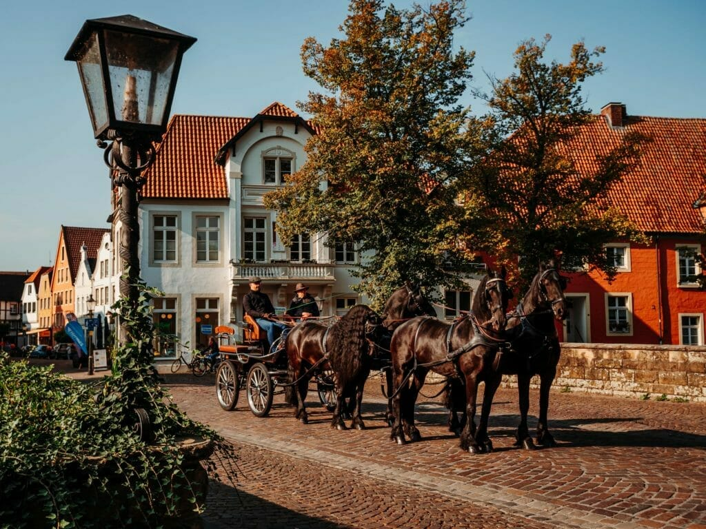 Münsterland - Warendorf - Kutsche - Pferde