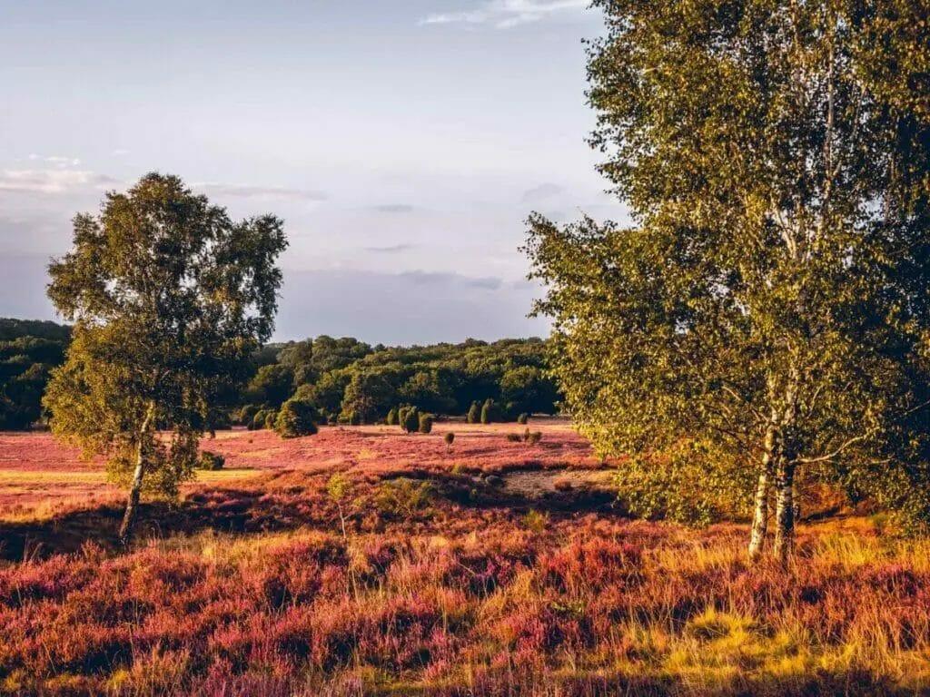 Ausflugsziele Brandenburg - Schönower Heide