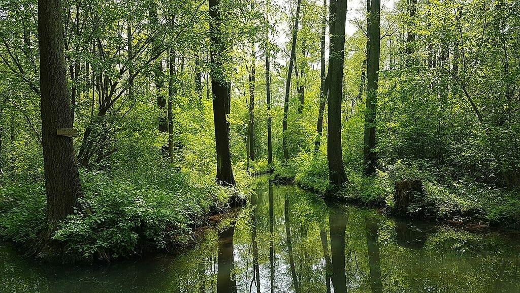 Ausflugsziele Brandenburg - Spreewald