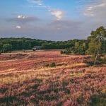 Ausflugsziele Niedersachsen - Coverbild -Lüneburger Heide zur Heideblüte im Abendlicht